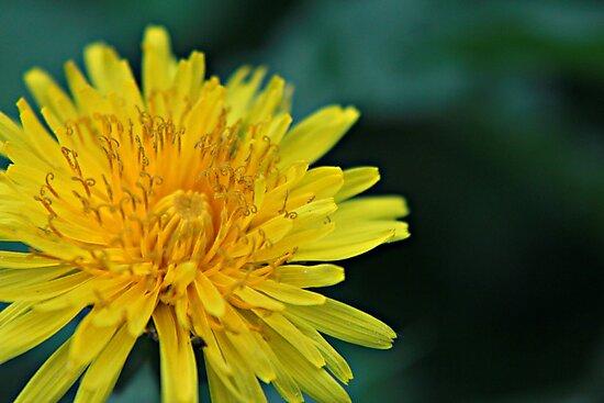 A Piece of Sunshine by Amberlynn Toth