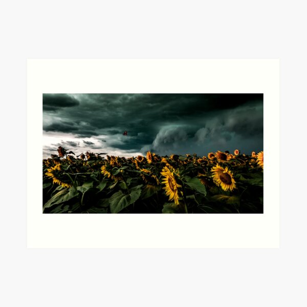 Summer Storm Over Sunflowers Art Print