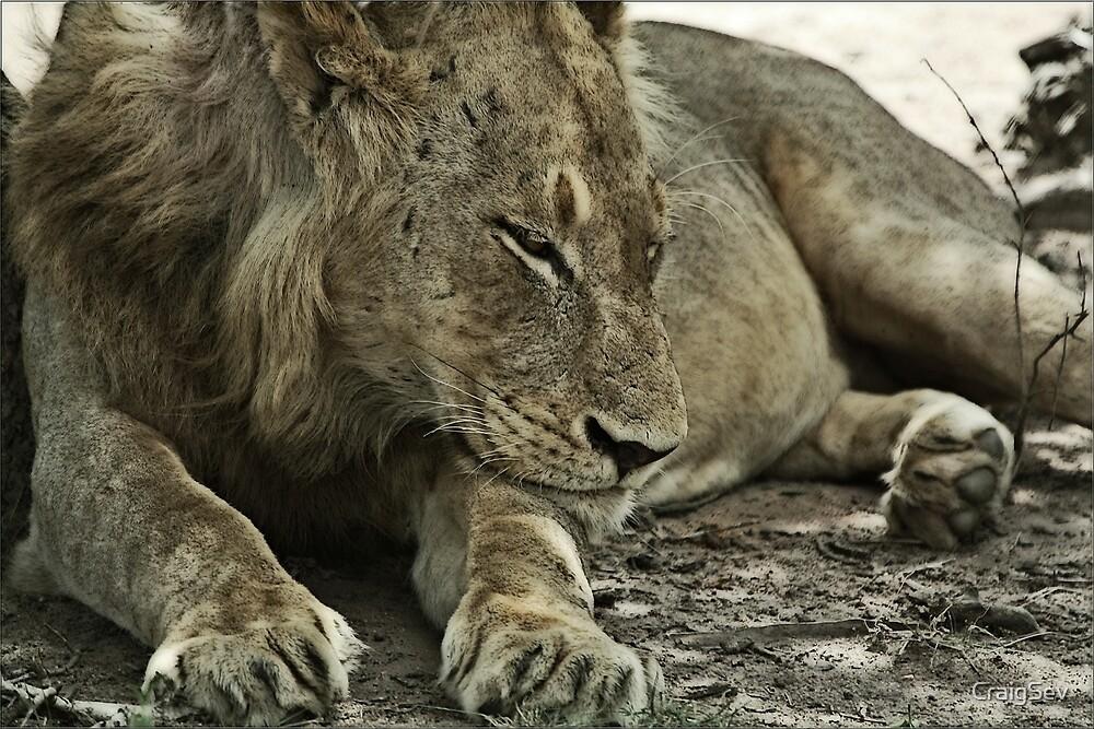 Lazy Lion by CraigSev