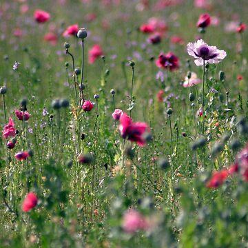 Earth Laughs in Flowers by jfractalj