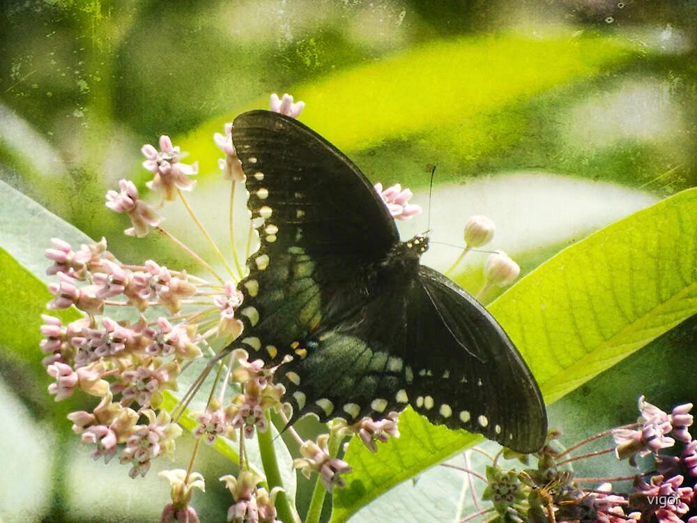 Butterfly Beauty by vigor