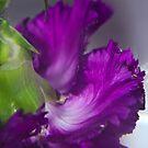 Violet by ZAPcreativity