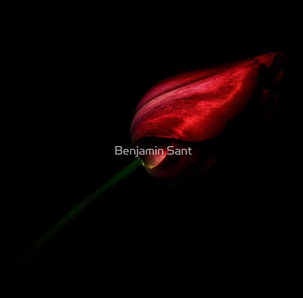Red by Benjamin Sant