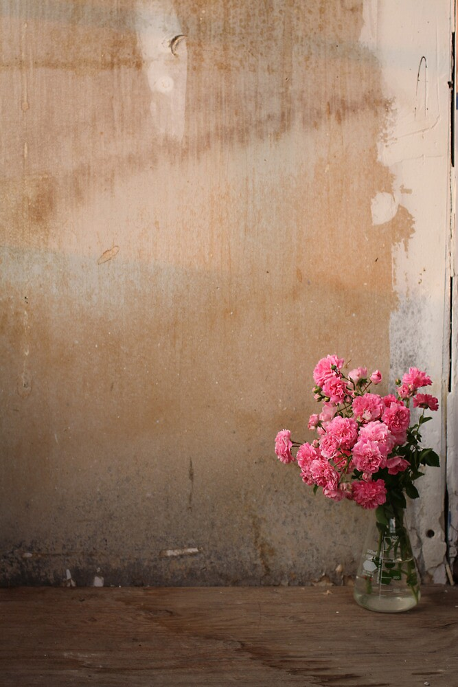 An Experiment in Roses by Cassandra DelliCarpini