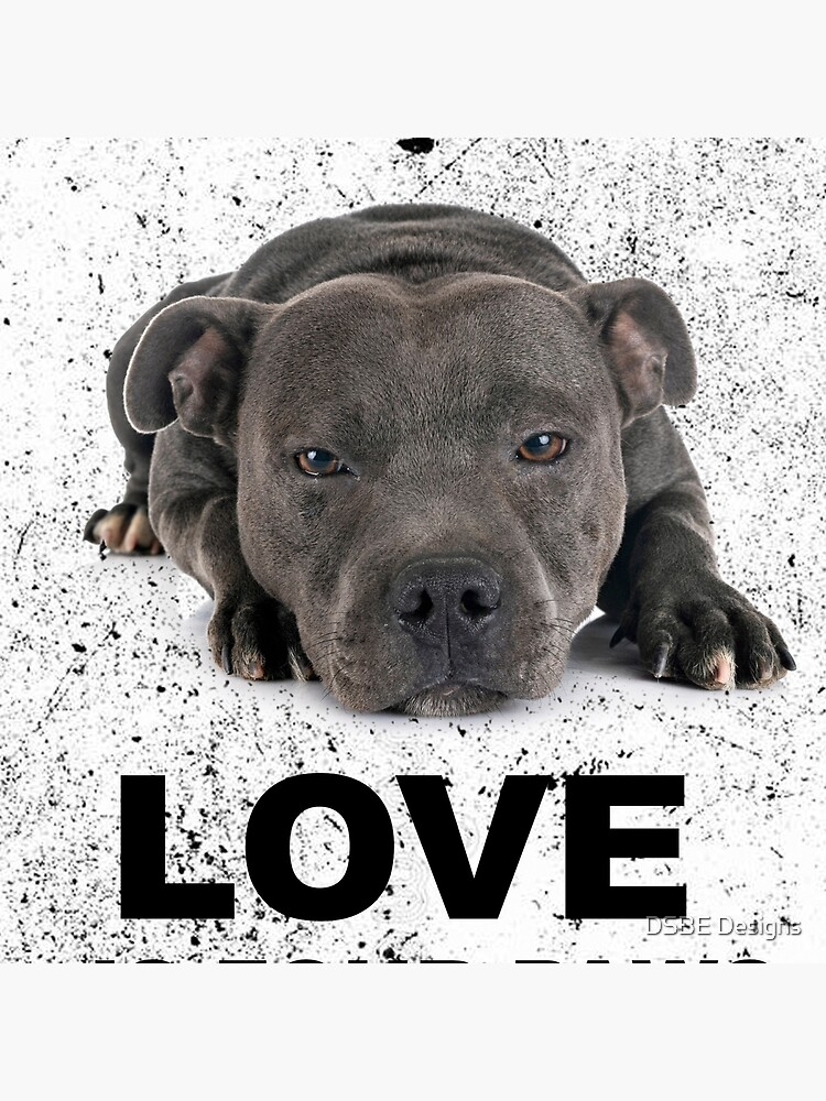 Love is 4 paws & waggy tail Blue Staffordshire Bull Terrier by lulabella666