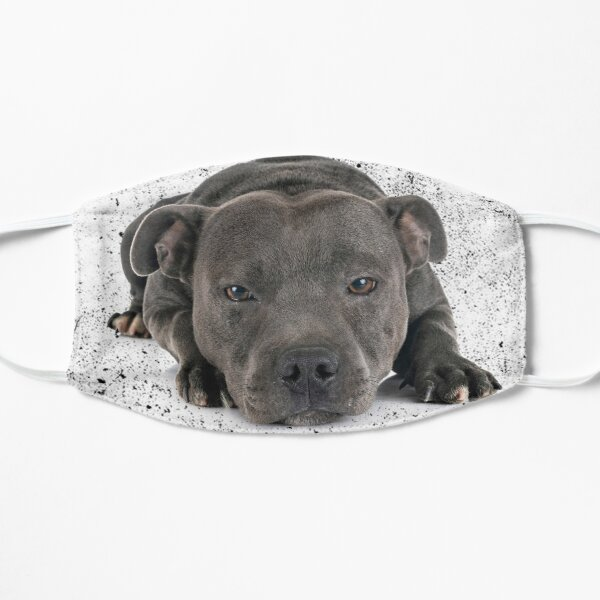 Love is 4 paws & waggy tail Blue Staffordshire Bull Terrier Flat Mask