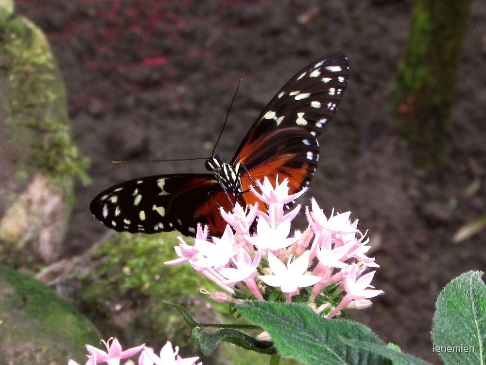 Beautiful Wings by ienemien