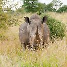 Rhino by Clive S