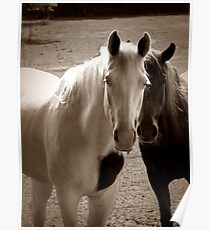 Two Horses in Sepia  Poster
