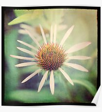 hope in a purple coneflower Poster
