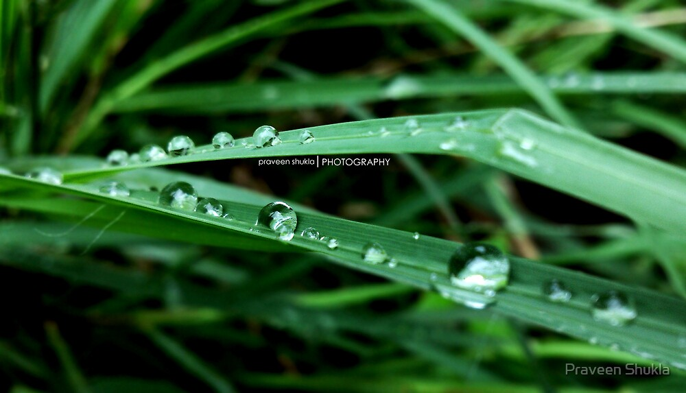 Droplets by Praveen Shukla