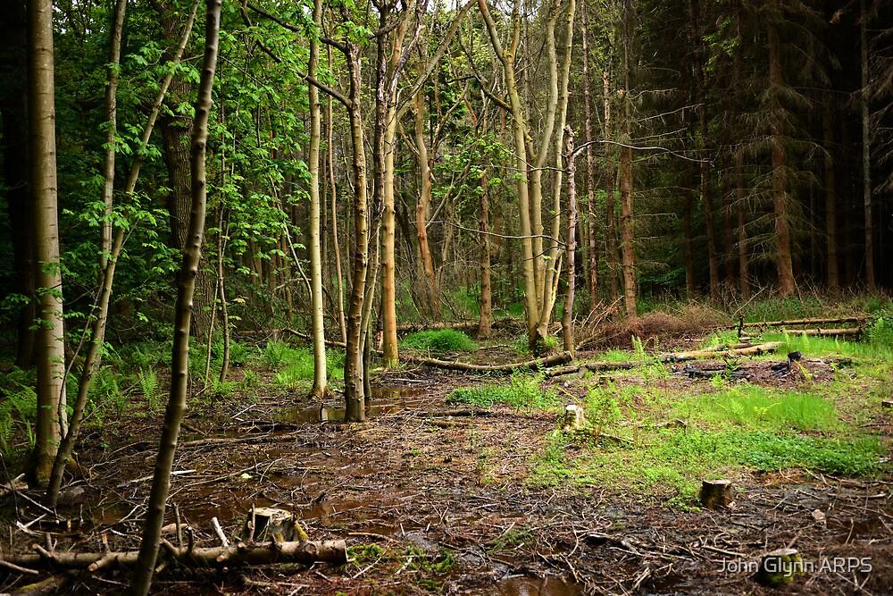 Wood #4 by John Glynn ARPS