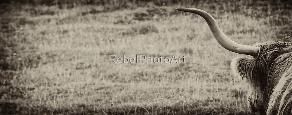 The Highland Coo by RebelPhotoArt