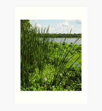 Fronds And Water Lilies Art Print