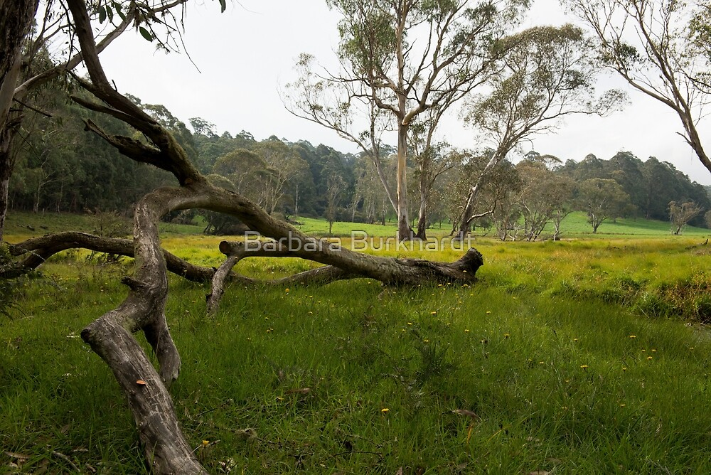 Field of Dandelions - an Australian Landscape by Barbara Burkhardt