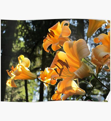 """Golden Splendor"" Family of Lilies Poster"