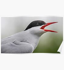 A (weird little thing that crapped all over you and sit on you) Bird Poster