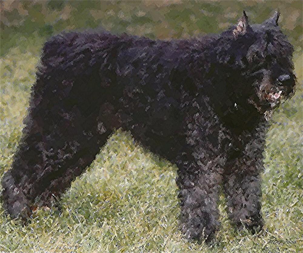 Bouvier Des Flandres Dog Portrait  by Oldetimemercan