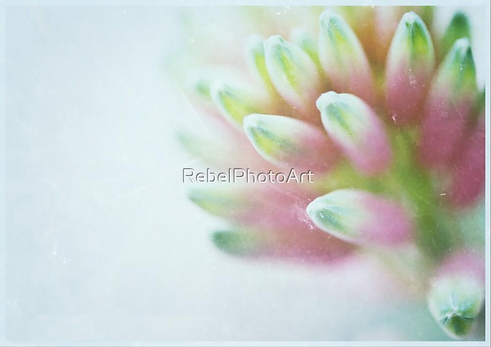 Fairy Flower by RebelPhotoArt