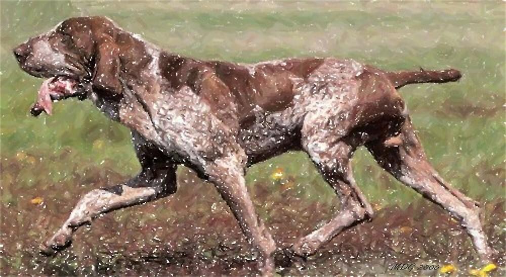 Bracco Italiano Dog Portrait by Oldetimemercan