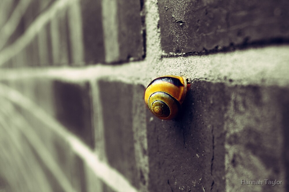 Snail On A Wall by Hannah Taylor