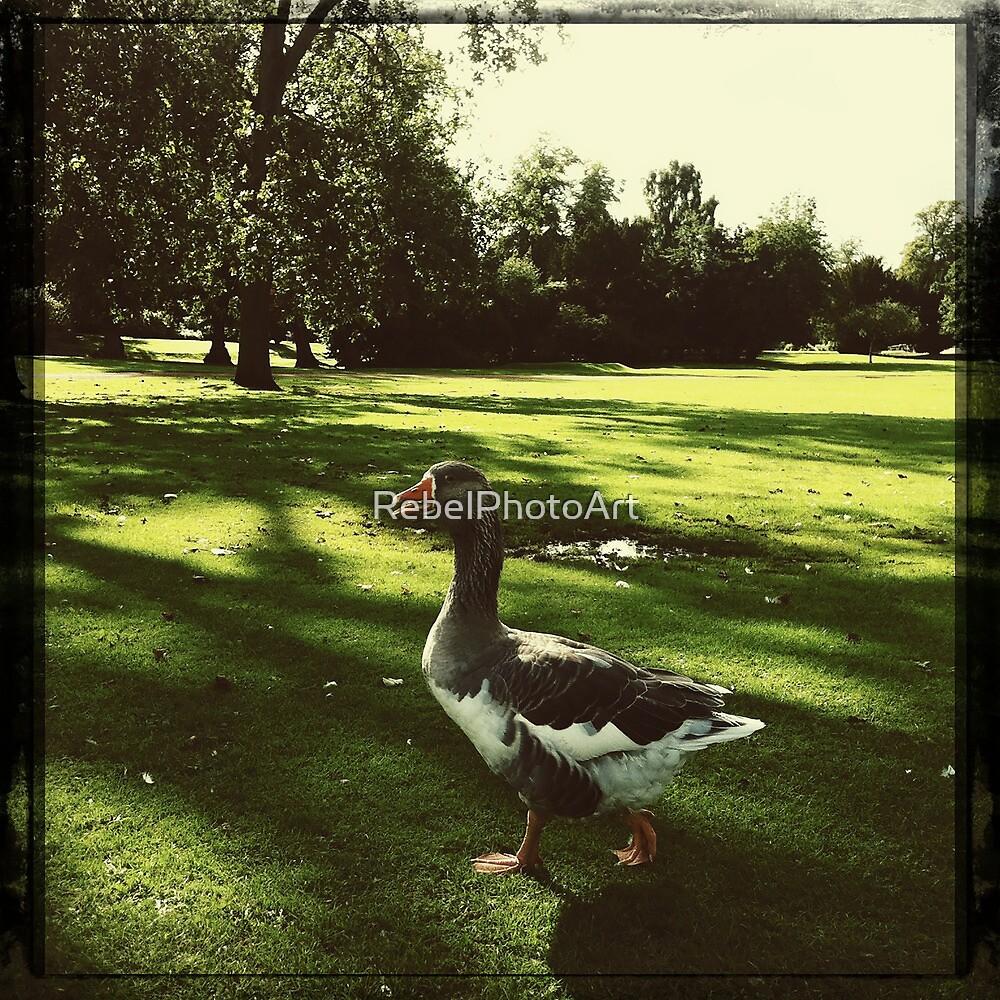 A Goose  by RebelPhotoArt