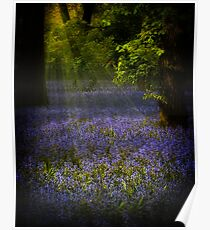 The Pixie's Bluebell Patch Poster