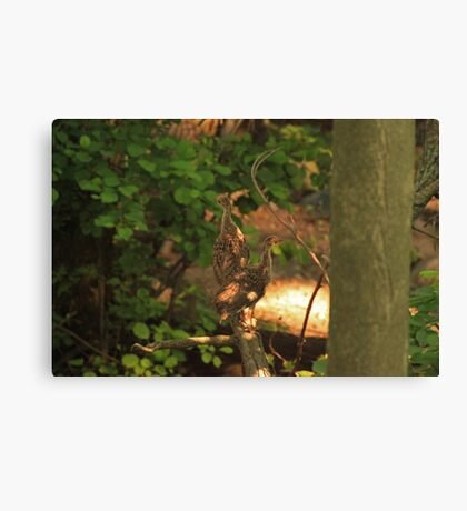 Baby Wild Turkeys Canvas Print