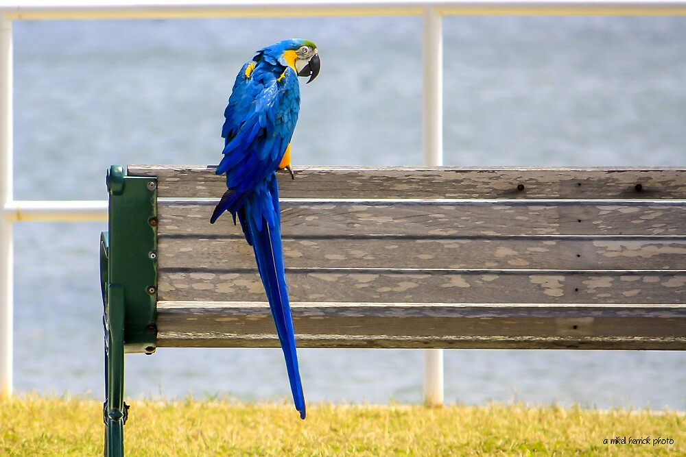 Benched Bird by Mikell Herrick