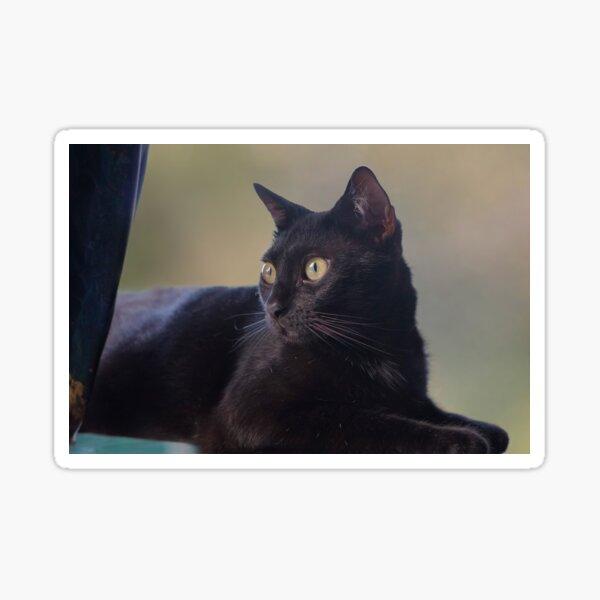 Portrait of a Young Black Cat Sticker