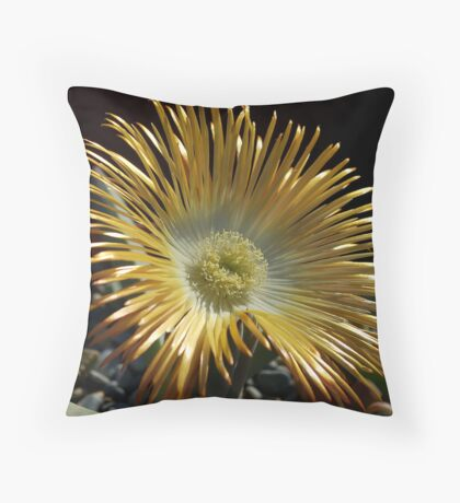 SUCCULENTS OF NAMAKWALAND - WESTERN CAPE SOUTH AFRICA 2 Throw Pillow