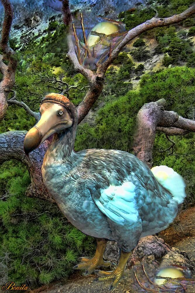 ☝ ☞RARE EXTINCT- DODO BIRD (RAPHUS CUCULLATUS) CARD/PICTURE ☝ ☞  by ✿✿ Bonita ✿✿ ђєℓℓσ