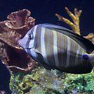 Striped Fish by Annie Underwood