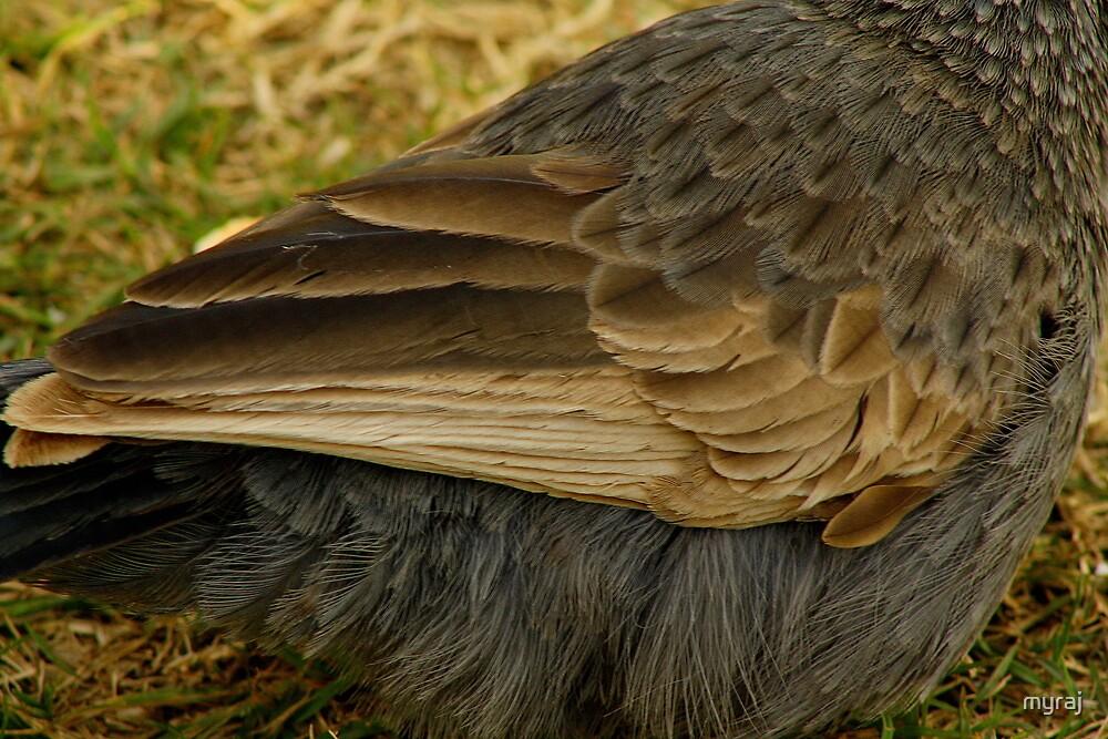 Don't ruffle my feathers by myraj