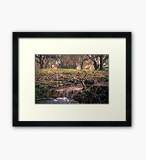 stream  Framed Print