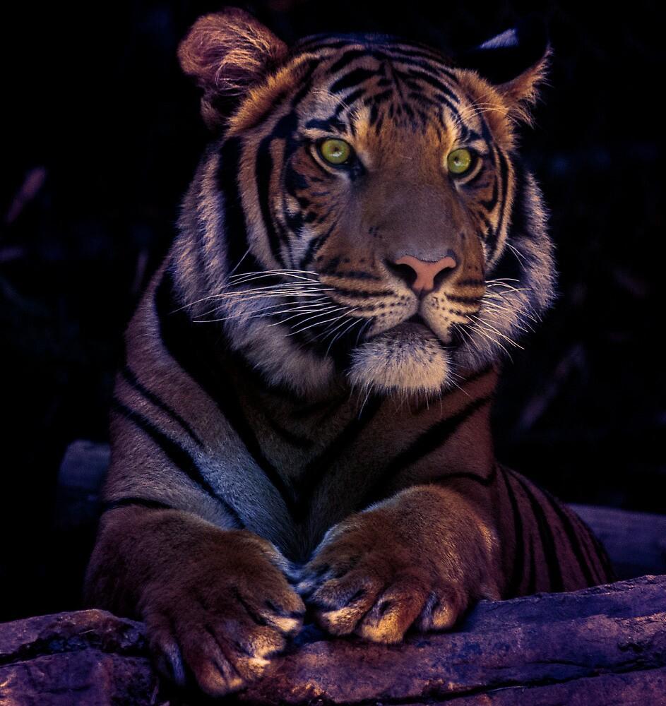 Tigress by Ageness