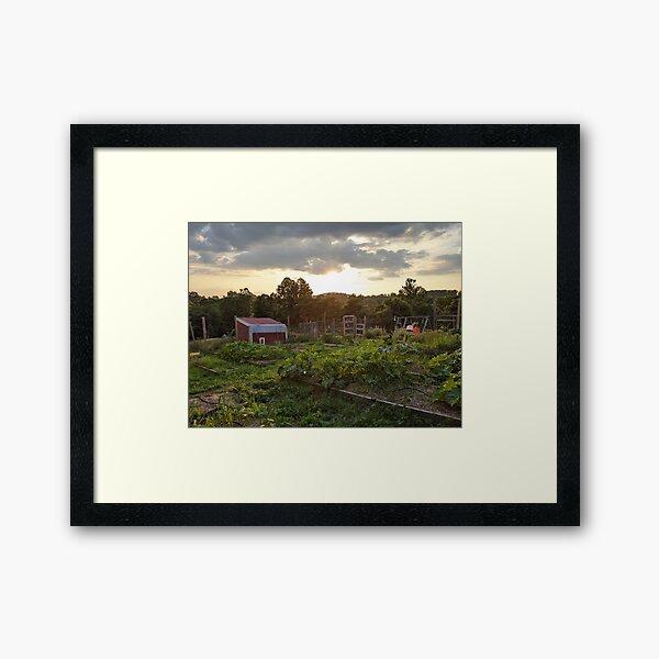 Garden Evening Framed Art Print