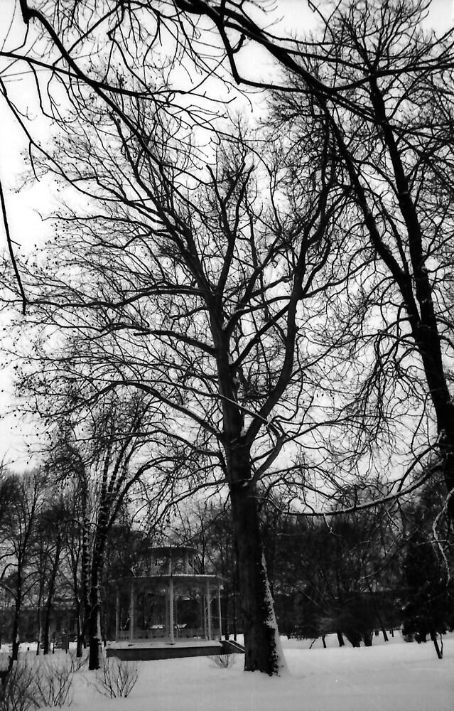 jaroslav kocian : old park 1  by verivela