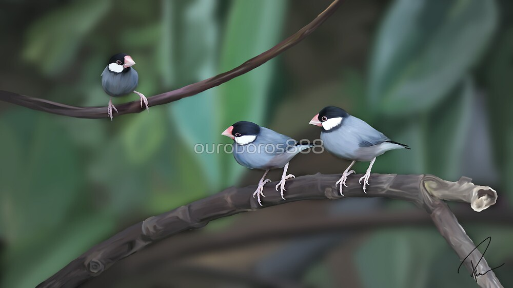 Java Sparrows by ouroboros888