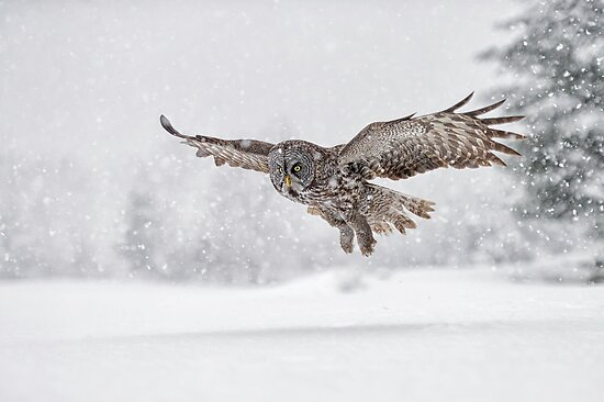 Always on the hunt... by Daniel  Parent