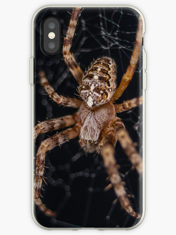 Creepy Spider iPhone Case by Nathan Colquhoun