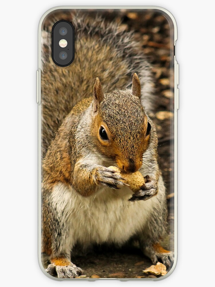 Squirrel iPhone Case by Nathan Colquhoun
