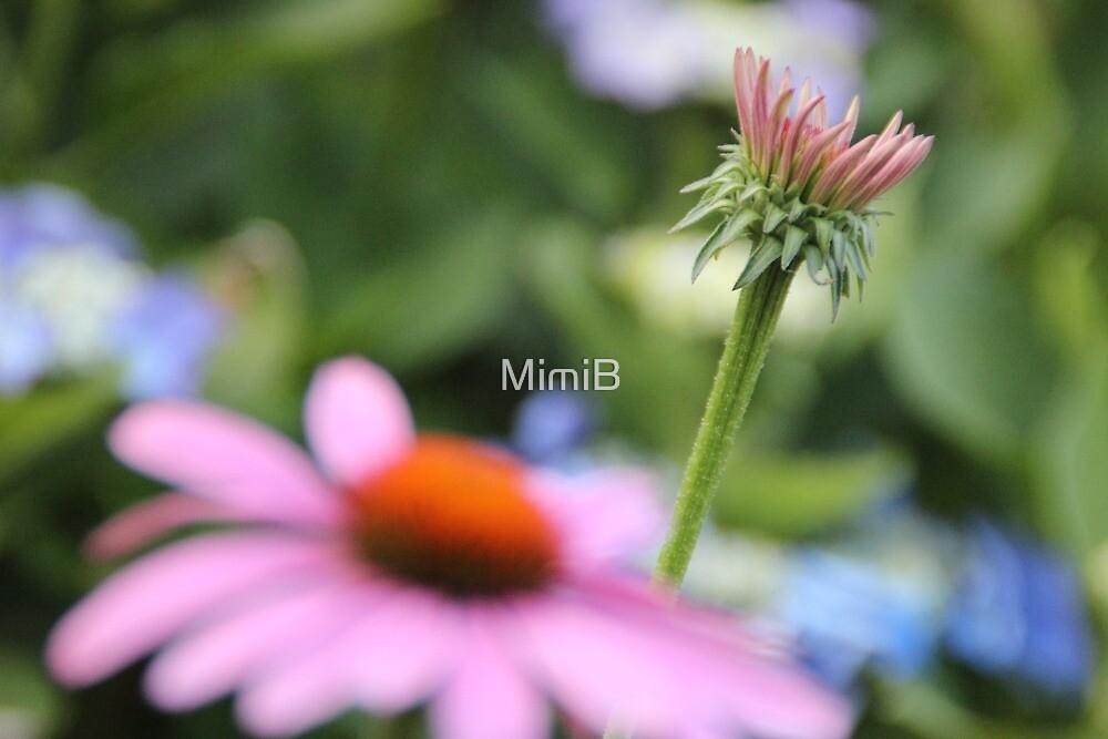 Wild medicine by MimiB