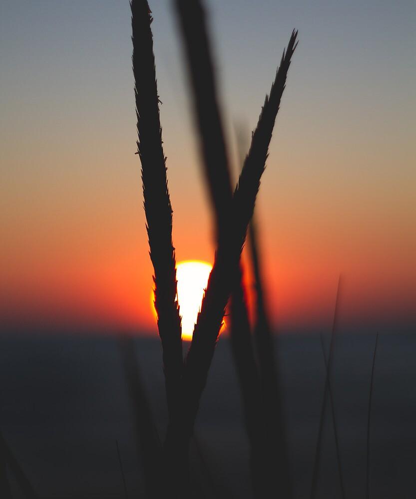 Sunset through beach grass by duotone