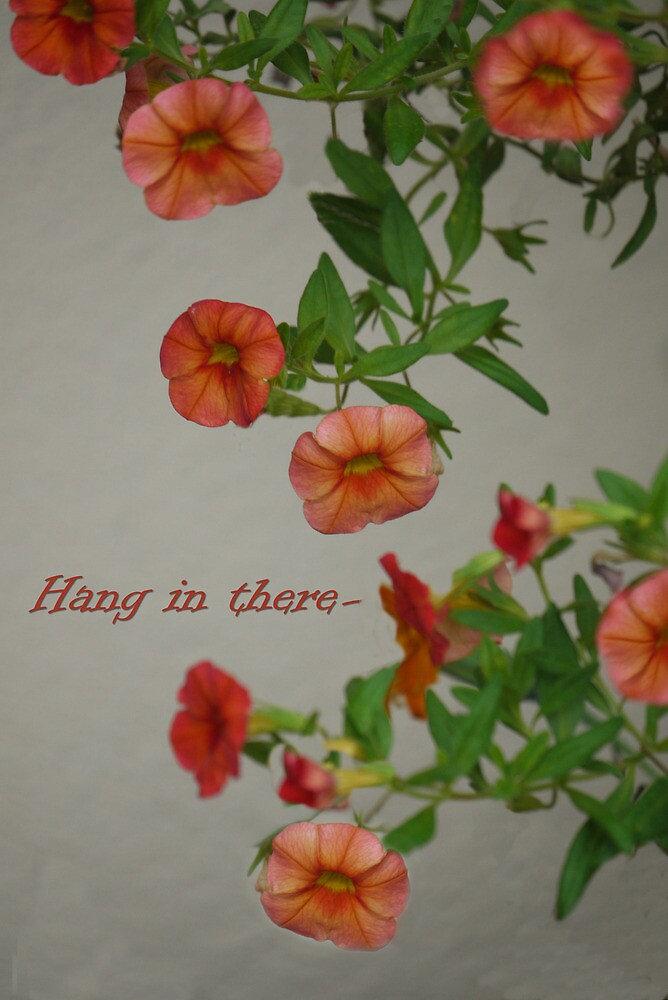 Hang In There by Kenneth Hoffman