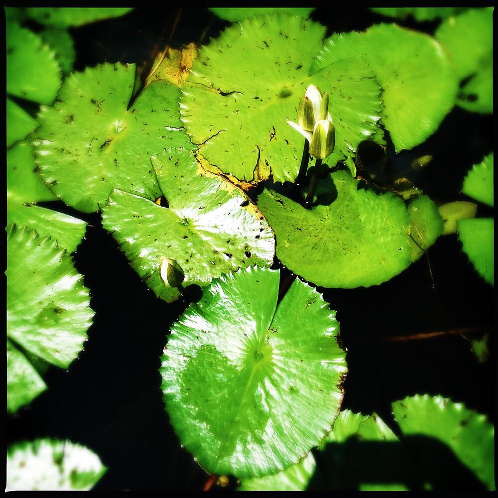 Pond by Niki Smallwood