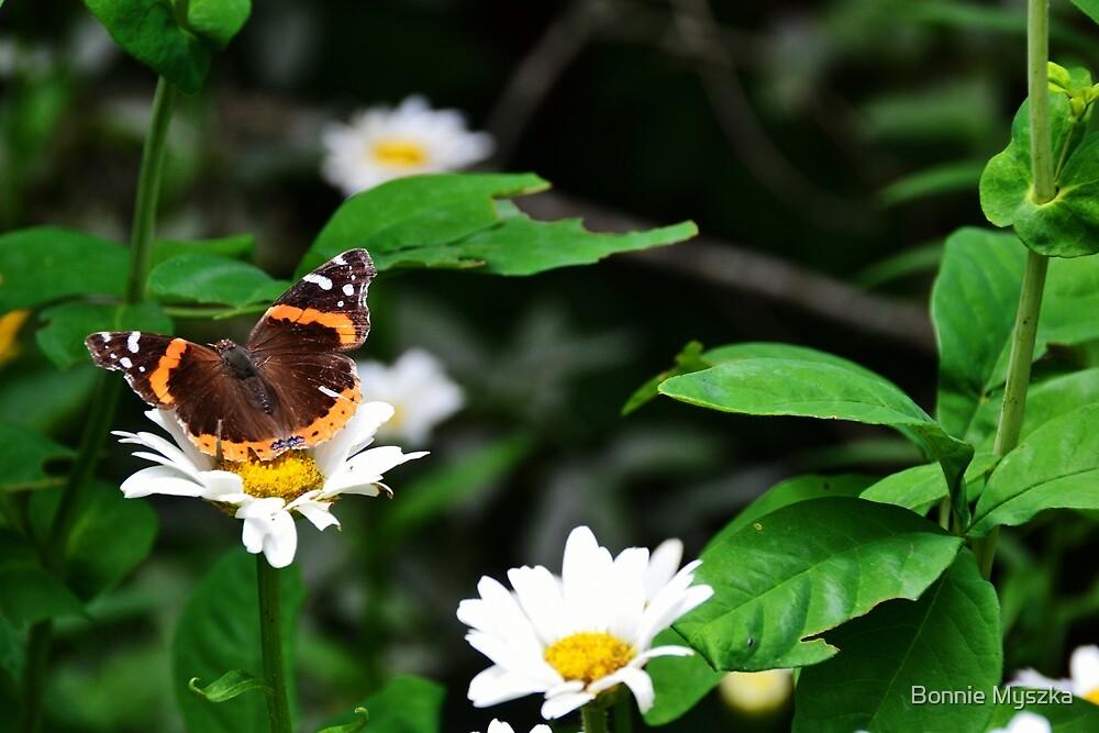 Monarch by Bonnie Myszka