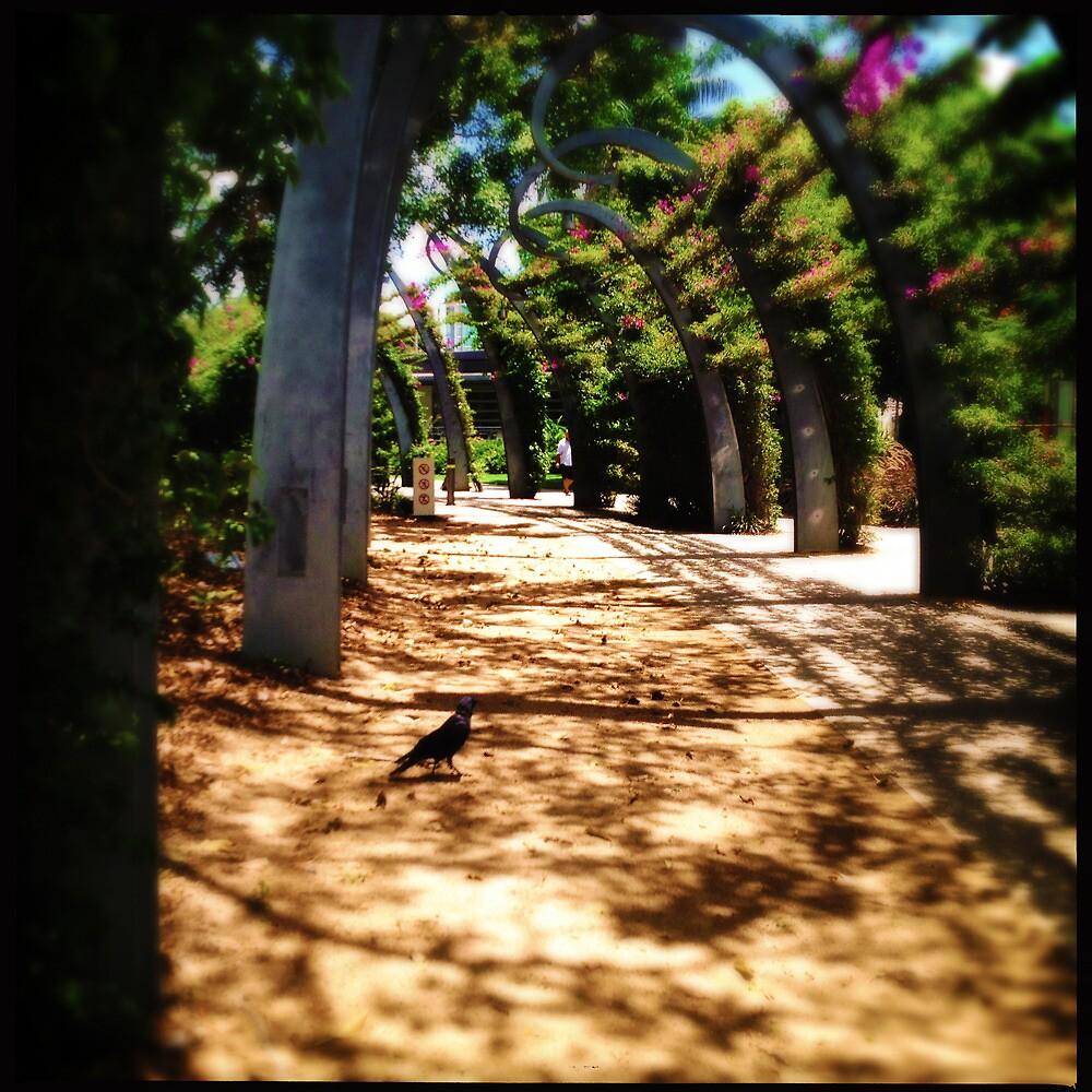 Crow Crossing by Niki Smallwood