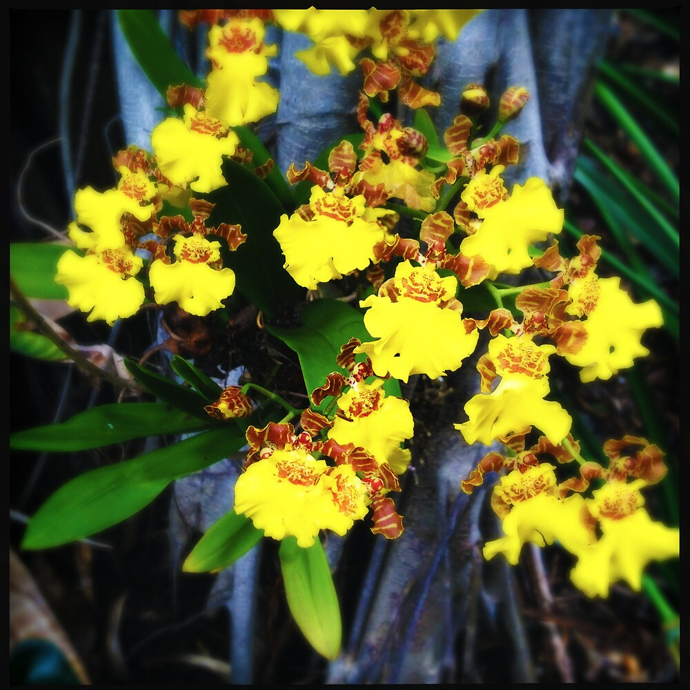 Yellow Orchids by Niki Smallwood
