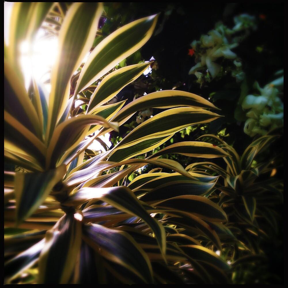 Leafy Goodness by Niki Smallwood